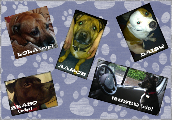 Meet the Med-Ecosse dogs!